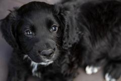 小黑狗從4樓住處被扔窗外墜地亡 狠心飼主辯:牠自己往下跳