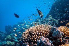 印尼古珊瑚大發現 世界最長地震竟持續32年