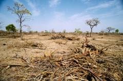 土地退化肇環境危機 聯合國促修復