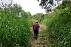 微解封上登山步道 山上草比人高小黑蚊狂叮快逃