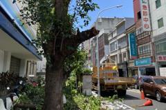 竹市路樹修剪引疑慮 中華電信解釋:將移植重種