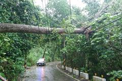 大雨傳災情!台南白河山區樹倒壓斷電桿 白河水庫洩洪