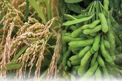 通膨怪獸前進農產品 國內外現股 ETF 期貨機會來了