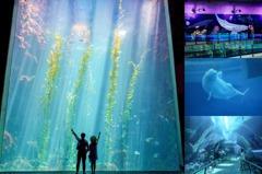 全台最大「屏東海生館」5大打卡亮點!巨型海藻唯美壯觀、最新螢光墻如海上星河