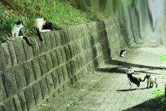 有靈性?他請野貓幫忙竟馬上找回走失貓咪 直呼:簡直是奇蹟
