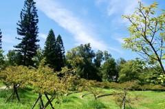 新竹/自然親水與古蹟老樹並存 詩情畫意的【新竹市公園】
