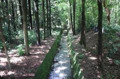 嘉義樹木園「五最」稀有植物迎賓