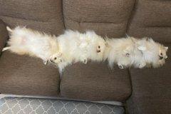博美三姊妹整齊列隊躺沙發 感情太好網友笑:奇蹟的瞬間