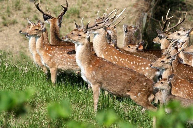 是小鹿沒事亂撞還是小狗亂追?為什麼不該帶狗進國家公園
