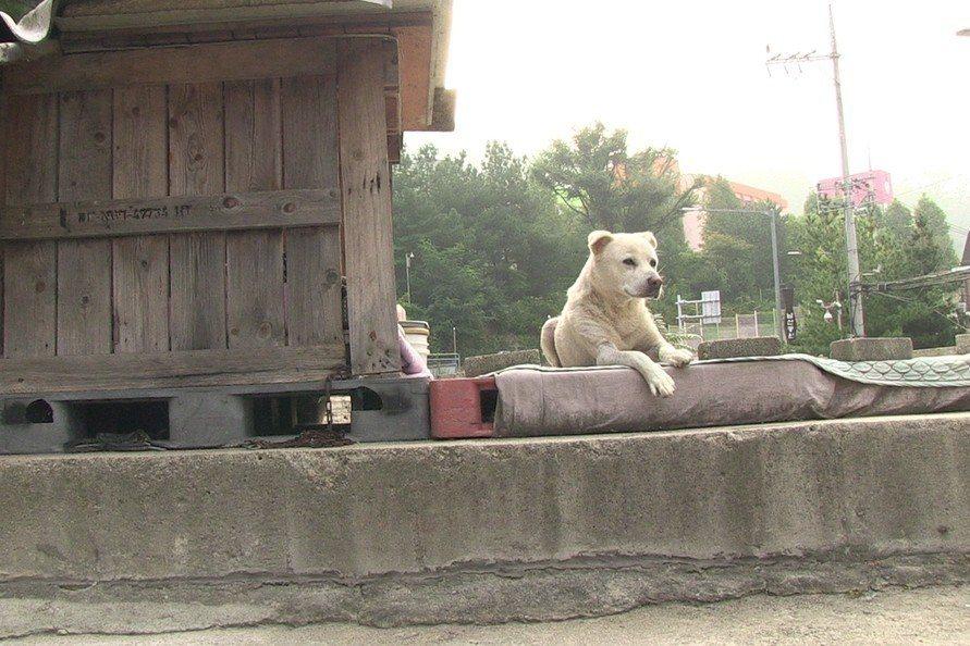 《白狗》:人、流浪狗、與被遺忘的事物之總和