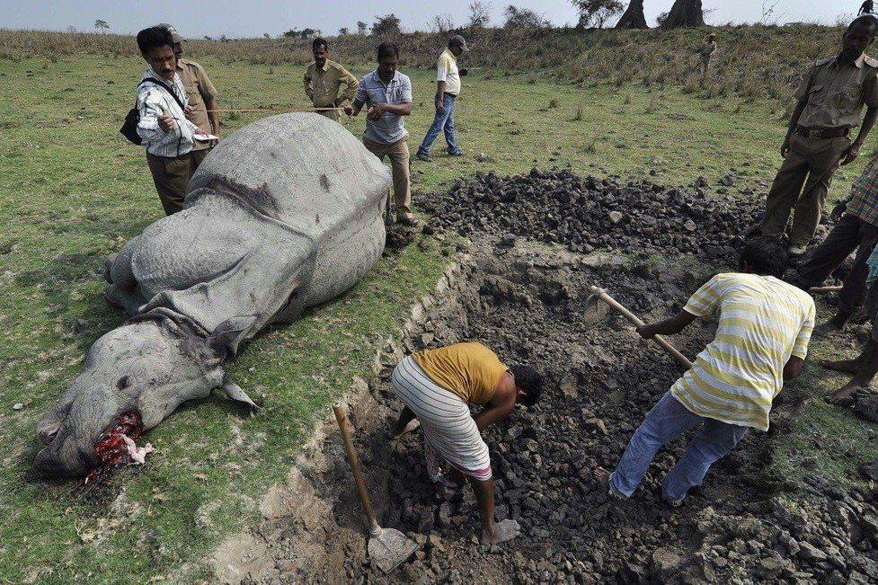 非洲野生動物保育:旅遊記者,來去非洲當志工