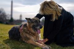 拜登2愛犬入住白宮 流浪狗圓了美國夢就任「第一狗」