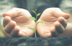 慶祝父親節 種樹團體倡為環境盡心力