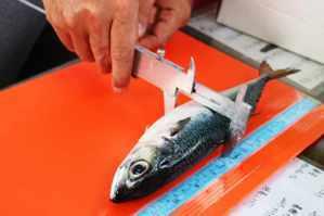 鯖魚(炒)