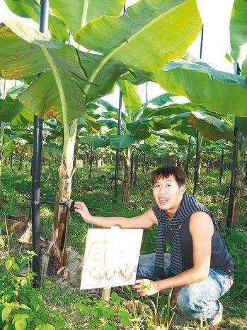 希望蕉園裡的香蕉樹,等待有緣人契作認養。 記者徐如宜╱攝影