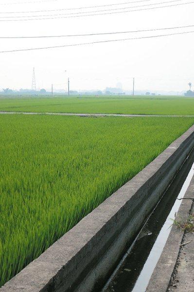 台灣的工業汙染非一朝一夕,要搶救已被汙染的環境,短期之道應先加重罰則。 記者劉學...