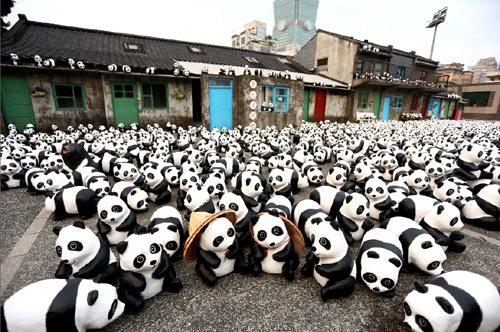 作者認為儘管「1600貓熊世界之旅」的確值得觀者省思背後所寓涵的議題,但令人惋惜...