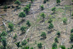 新苗的沃土,來自倒下的大樹