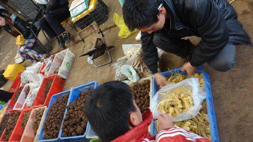 雲南的野菌交易市場,農民以便宜的價格批售珍貴的天然菇蕈。圖/林怡潔提供