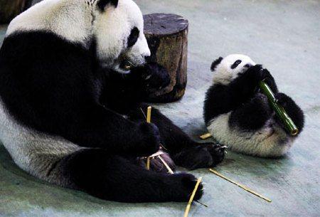 除了圓仔,台北市立動物園還剩什麼?