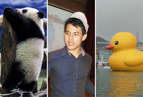 這一陣子以來台灣媒體的焦點:圓仔、吳憶樺、黃色小鴨。