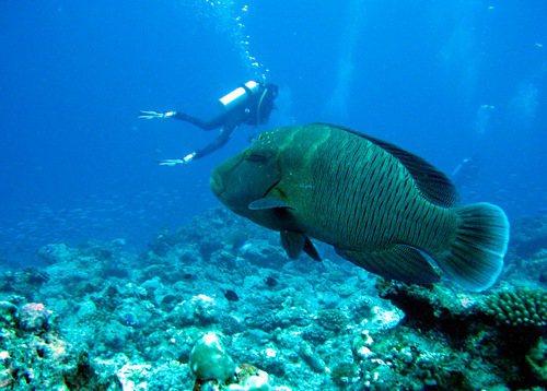 圖/台灣珊瑚礁學會提供