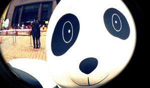 看得見的熊貓與看不見的