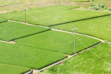 農村最美的風景:有年輕人,沒有華麗農舍