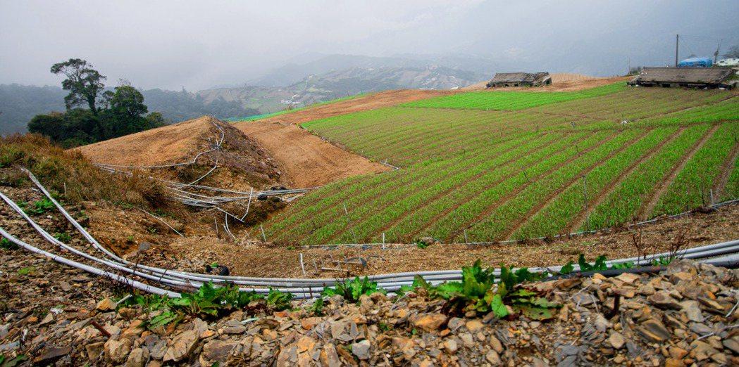 高山作物旁,都有裸露非常明顯的水管線路,彷彿是一座露天的高山農業工廠。 記者黃士...