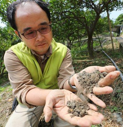 觀樹教育基金會主任江進富表示,長期噴除草劑與慣性農法施肥導致土壤硬化,一捏即碎。...