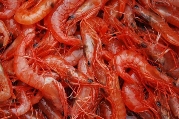 攝取含鋅食物可預防攝護腺病變。 圖/台灣好食材