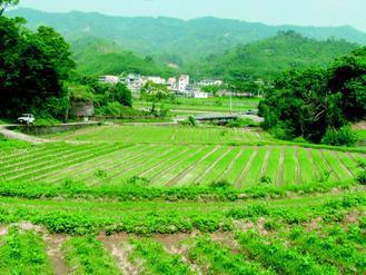 「迴鄉農場」在苗栗銅鑼新雞隆山區,開墾17公頃田地,將休耕田活化。