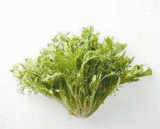 菊苣(綠捲)