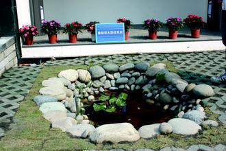 門前生態池(記者陳立凱/攝影)