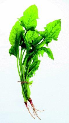 深綠色、深黃色的蔬菜如菠菜、花椰菜等均富含有葉黃素,可減少陽光傷害。 記者陳立凱...