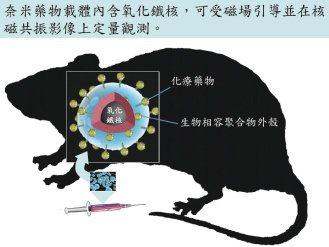 4奈米藥物內含氧化鐵,利用外在磁力集中在腦瘤病灶,發揮藥效。 圖/長庚神經外科研...