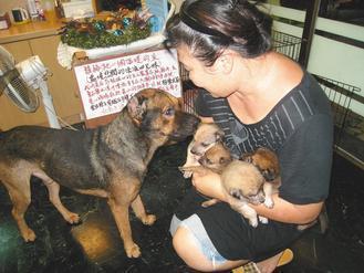 照顧流浪狗的狗醫師「一耳」,看到志工抱著颱風天救起的小小狗,馬上趨前探視。記...