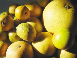 柑橘家族的種類很多。