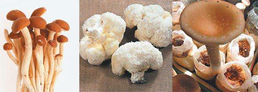 從左至右為柳松菇、猴頭菇、酒杯菇。
