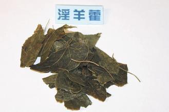 中藥材「淫羊藿」名稱不雅,中醫師視為中藥界的壯陽藥。 記者楊德宜/攝影