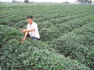 「番薯王」楊協翰與他的有機地瓜田。