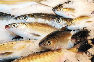 虱目魚味道鮮美、營養價值高,適合民眾夏季攝取補充體力。漁業署/提供