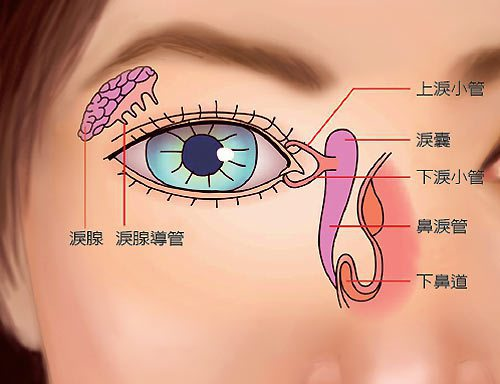 淚液主要功能是潤滑眼球表面,讓視覺更清晰。水份是淚液最主要的成份。水分佔淚液成分...