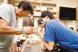 寵物醫院獸醫師在有空調的室內看診,工作環境相對舒適。 記者徐兆玄/攝影
