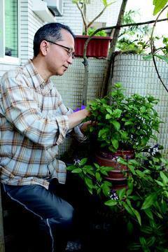 韓伯檉陽台上的小花圃,植物長得極好,祕訣是澆灌「洗米水和洗菜水」。 圖天下雜誌出...