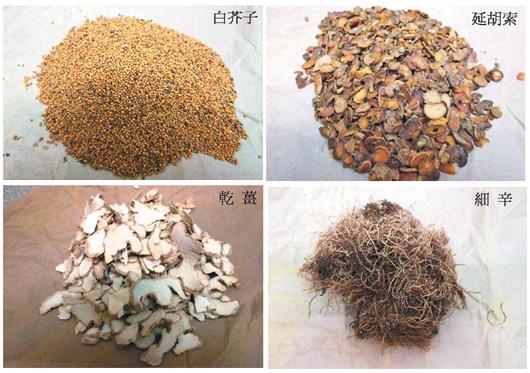 細辛、白芥子、延胡索、乾薑是三九貼常用基本藥材。 圖/陳彥光醫師提供非報系
