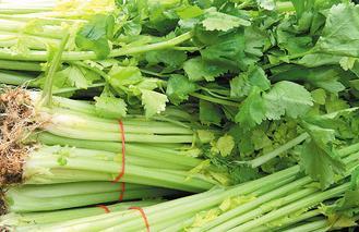 芹菜。  圖/本報資料照片 記者曾學仁/攝影