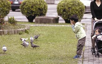 民眾到戶外接觸鴿子、野鳥,要注意清潔,避免感染隱球菌。 報系資料照