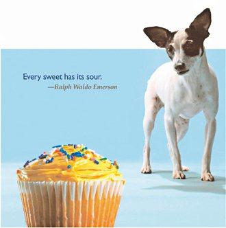 圖/美國愛護動物協會