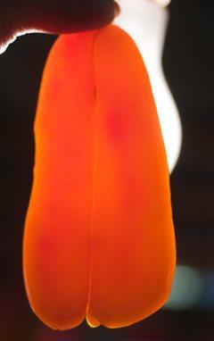 完美的烏魚子呈現的是琥珀色。記者鄭超文/攝影